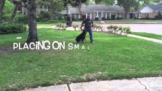 Doberman Pinscher Begins Off Leash Obedience | Www.sitmeanssithouston.com
