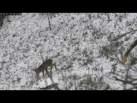AEF-DC Eagle Cam ~ Let It Snow ~ 01·07·17