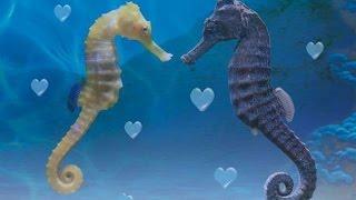 Sea Life. Лондонский аквариум