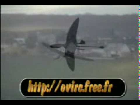 Dimorphodon rc pterosaur