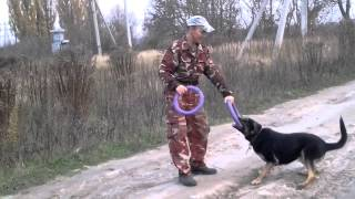 Приучение собаки к аппортировке с помощью пуллера