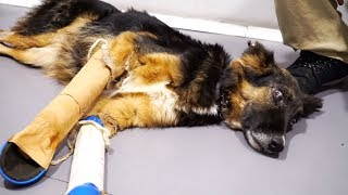 THEY BROKE A BLIND, PREGNANT DOG'S FRONT LEGS AND ABANDONED HER IN THE HILLS!