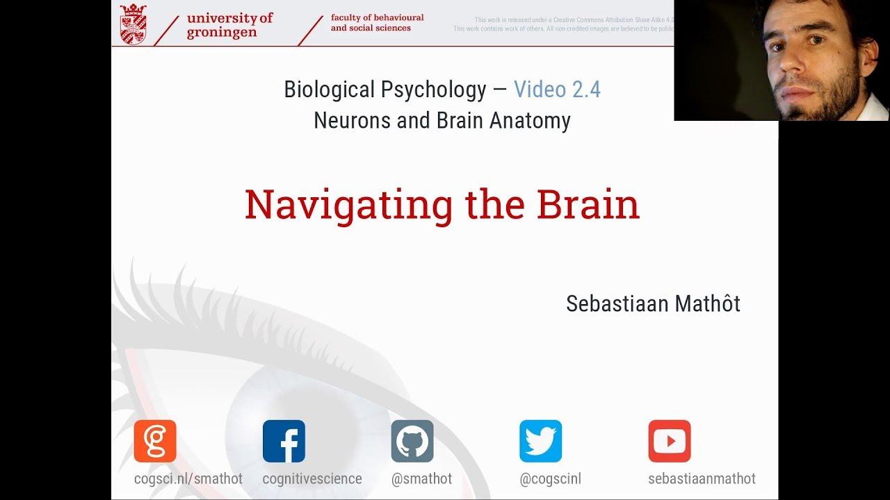 Navigating the Brain   Biological Psychology 2.4 - YouTube