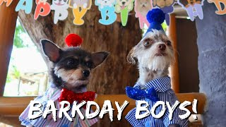 We Went All Out For Our Dogs' Birthday | Vlog #1125