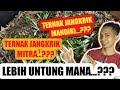 Ternak Jangkrik Mitra Dengan Ternak Jangkrik Mandiri  Mp3 - Mp4 Download