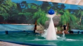видео про дельфинов для детей смотреть В Мире Детей