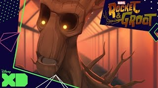 Rocket and Groot | Shapeshifter | Official Disney XD UK