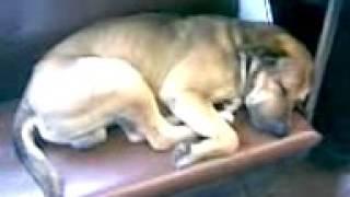В Метро собака + хозяин спят