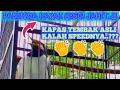 Jalak Suren Isian Kapas Tembak Speed Rapat Banget Masteran Murai Batu  Mp3 - Mp4 Download