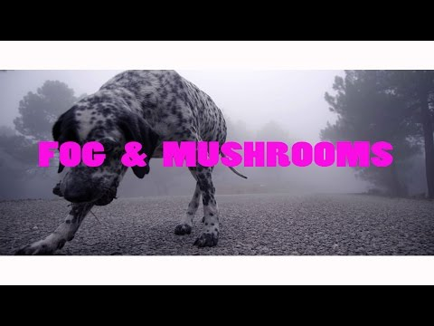 FOG & MUSHROOMS | Sony a6300 120fps cinematic