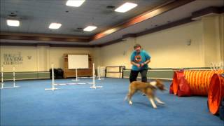 Gaze Agility Training 9 Months