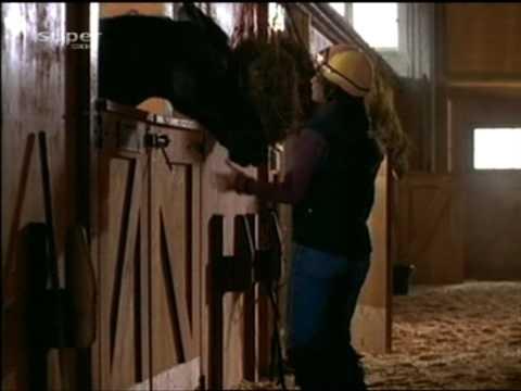 Youtube Pferdefilme Deutsch