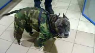 доврачебная помощь животным 011