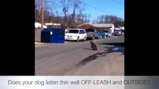 100% Obedience-100% Off-leash! Dog Training Maryland, Virginia