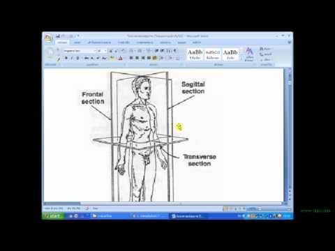 กายวิภาคศาสตร์ /แพทย์แผนไทย ๑