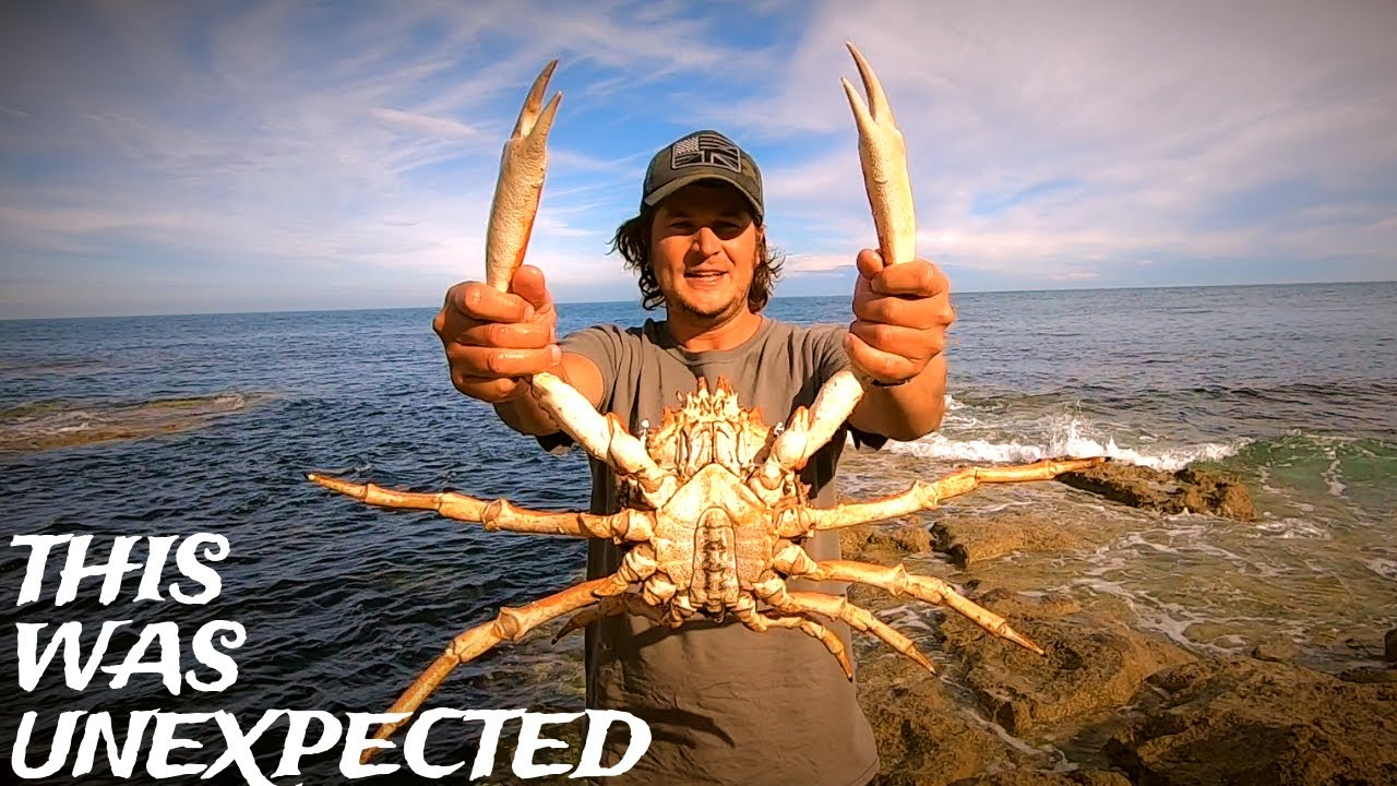 GIANT HAND CAUGHT CRAB - Catch & Cook - Coastal Foraging - Wrasse Fishing - With 2 Subscribers