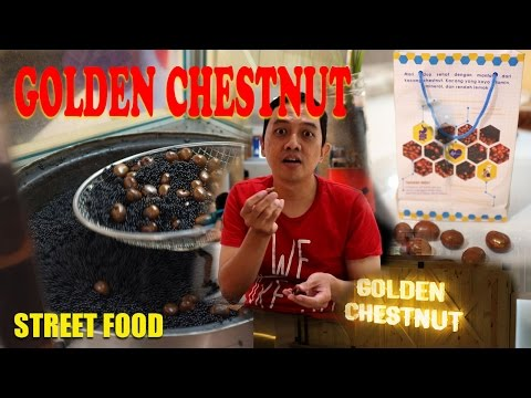 Golden Chestnut Jogja - Hartono Mall