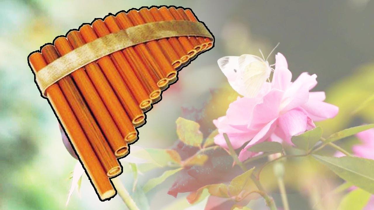Flûte De Pan Best Of Frantz Amathy Fleurs Et Oiseaux Musique Zen Douce Relaxation Youtube