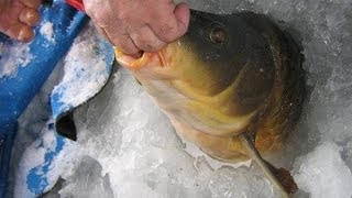 Карп зимой Зимняя рыбалка на карпа Огромны карт зимой рыбалка 2015(Карп зимой Зимняя рыбалка на карпа Огромны карт зимой рыбалка 2015 https://www.youtube.com/watch?v=pO3W1NMmr8k Карп — популярный..., 2013-12-10T01:35:47.000Z)