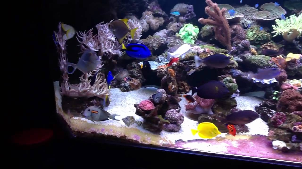 Detroits worst 600 gallon fish reef tank ever for Best fish for reef tank