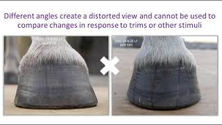 Documenting for PRO active whole horse and hoof health