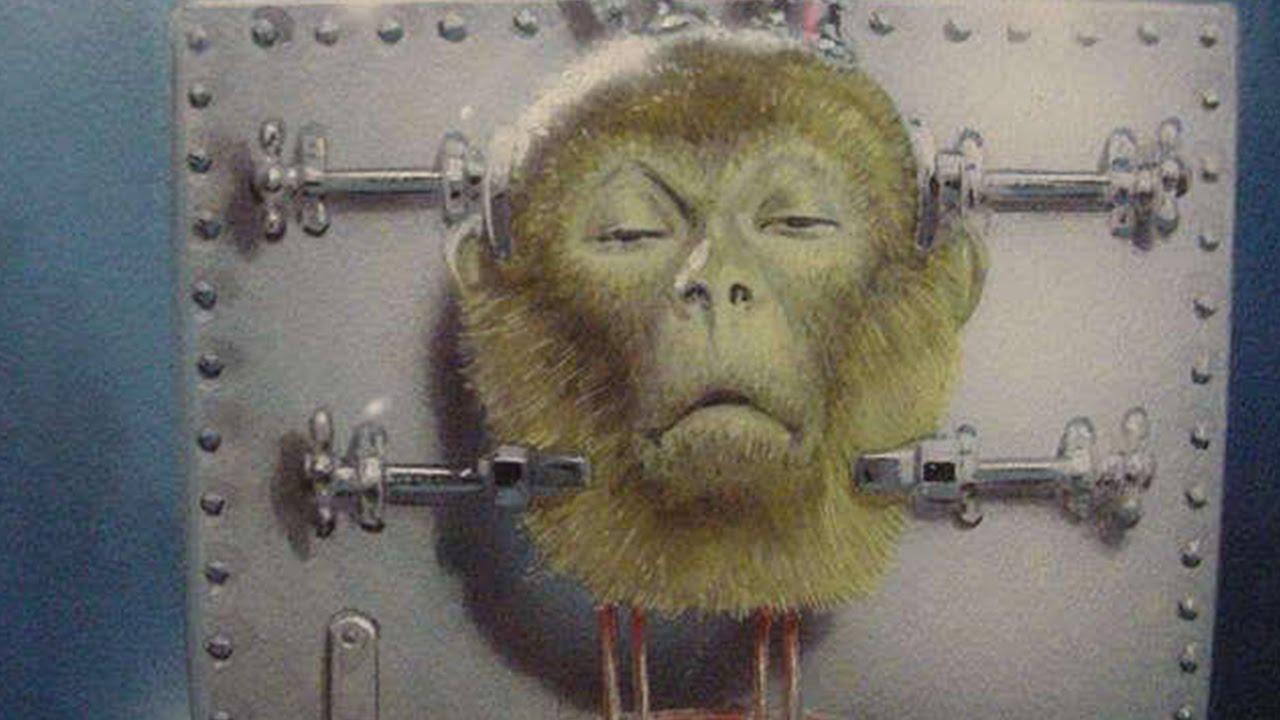 Image result for head transplant MONKEYS