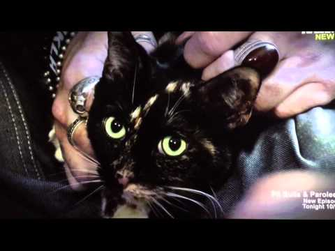 Dr. Patrick Mahaney appears on My Cat From Hell Season 5 to examine Sweet Pea