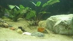 Elämää akvaariossa