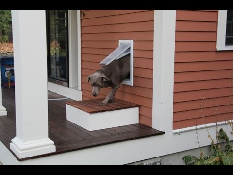 Installing A Pet Door & Installing A Pet Door - YouTube
