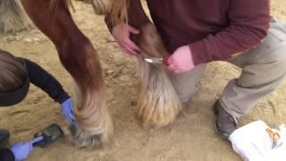 Horse Ergot Trimming Tool