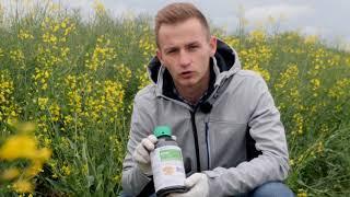 Demo Farma Rogów - Belkar + Kliper herbicydy do zwalczania chwastów w rzepaku
