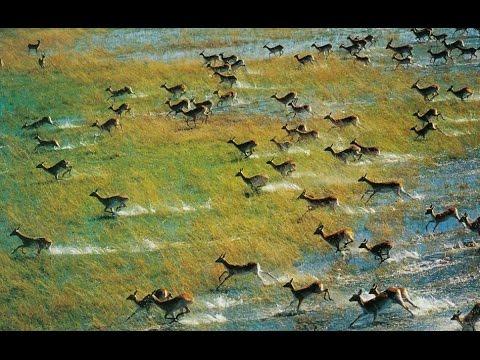 Nomad's New Okavango Delta Experience