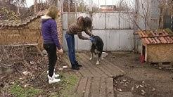 Млади жени спасяват кучета в Нова Загора, а Общината отказва да направи приют