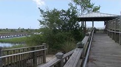 "Castaway Island Preserve- ""Walk in the Park"""