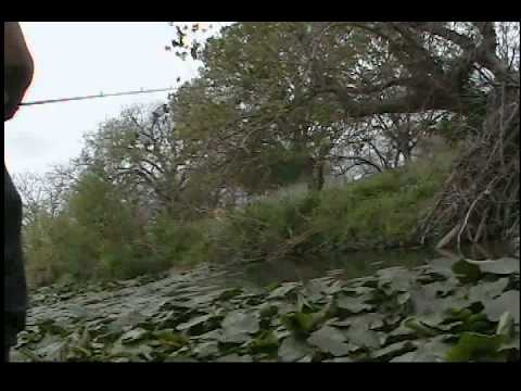 San antonio bass fishing in huge lily spot youtube for Bass fishing in san antonio