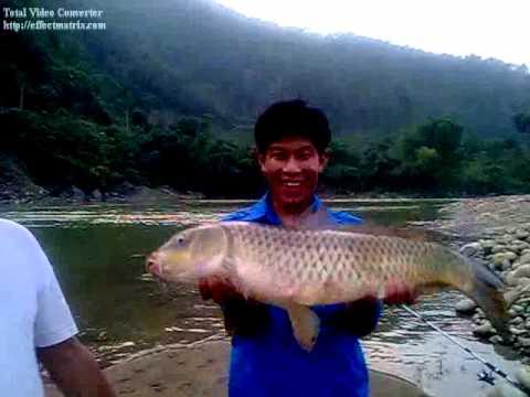 câu cá chép 8kg ở Tân Uyên, Lai Châu.flv