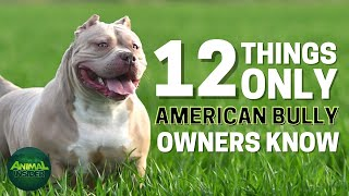 12 Things Only American Bully Dog Owners Understand
