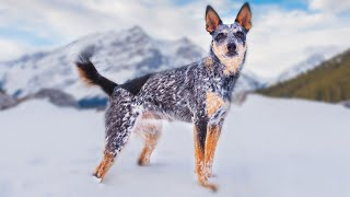 The Best 10 Shepherd Dog Breeds