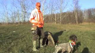Hunting Dog Training - Water Retrieves From A Blind