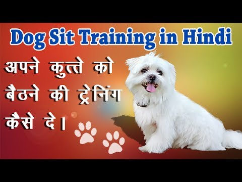 How To Train your Dog to Sit in Hindi?