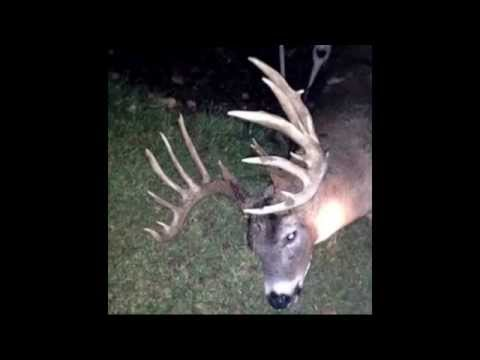 Giant 24 Point Buck Hit By Car In Ohio!