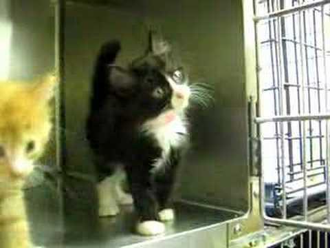 Kitten Available for Adoption - Phoenix