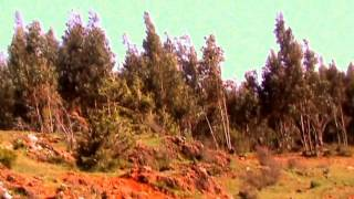 Journey to Shenkero Mikael Gedam, Addis Ababa, Ethiopia