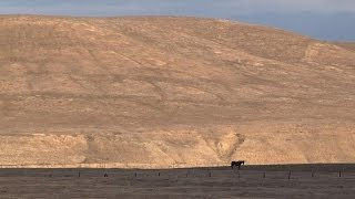 Ranchers pray for rain in drought-hit California