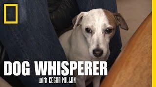 Chaotic Kisses | Dog Whisperer