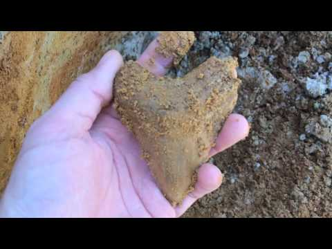 The Best Megalodon Tooth Hunting Site I Ever Found