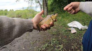 рыбалка на поплавок 2020 на карася Летом
