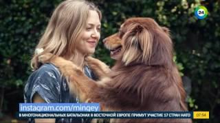 Инстамир. Собаки звезд. Эфир от 27.10.2016