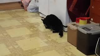 고영희, 고양이, 장금이 쥐 잡았다 거실에서!