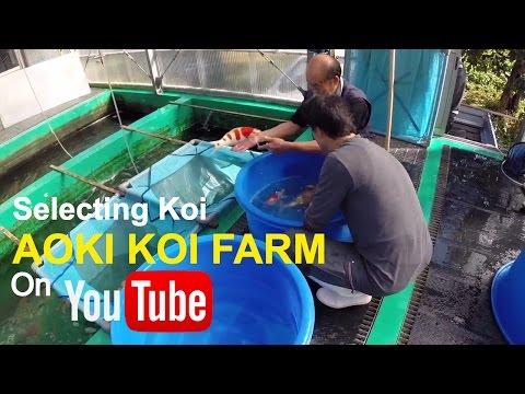 Repeat Blackwater Creek Koi Farm by Blackwater Creek Koi